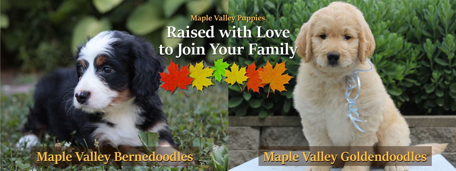 Maple Valley Puppies | Adoptions